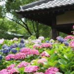 梅雨を楽しむ!全国のアジサイの名所【北海道編】