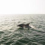 イルカのジャンプが見てみたい!おススメのイルカウオッチングはここだ!