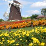 オランダ旅行初心者必見!これだけは知っておきたいオランダ語
