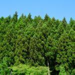 日本三大人工美林>天竜杉、吉野杉、尾鷲ヒノキ