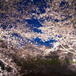 日本三大夜桜>高田城跡公園・弘前公園・上野公園