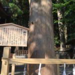 日本三大奇祭>国府宮裸祭、尻叩き祭り、御柱祭