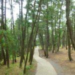 日本三大松原>三保の松原、気比松原、虹の松原
