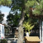 日本三大松>奥州日の出の松、羽衣の松、高砂の松