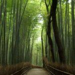 名所・逸品に出会う旅>京都府京都市